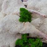 lamb-09-crumbed-cutlets